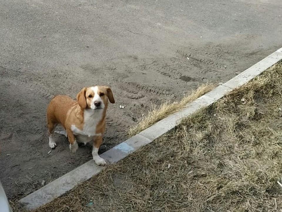 В Красноярске выкидывают кошек и собак из-за боязни коронавируса. Фото: Солнечный. Помощь животным.