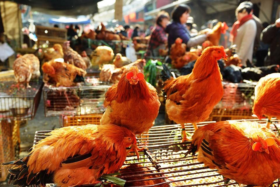 В Китае зарегистрирован первый в мире случай заражения человека вирусом птичьего гриппа H10N3.