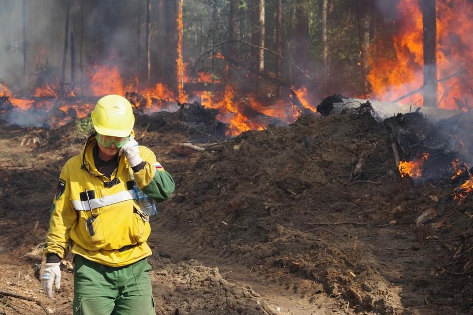 «Ситуация показывает, что природа меняется»: дым от лесных пожаров в Якутии дошел до Аляски. Фото: Авиалесоохрана