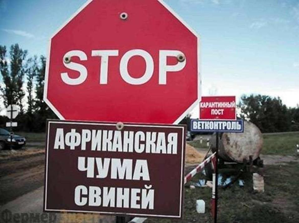 Очаг АЧС обнаружен в нескольких селах Свободненского и Серышевского районов Фото: https://www.instagram.com/denisiniutochkin/