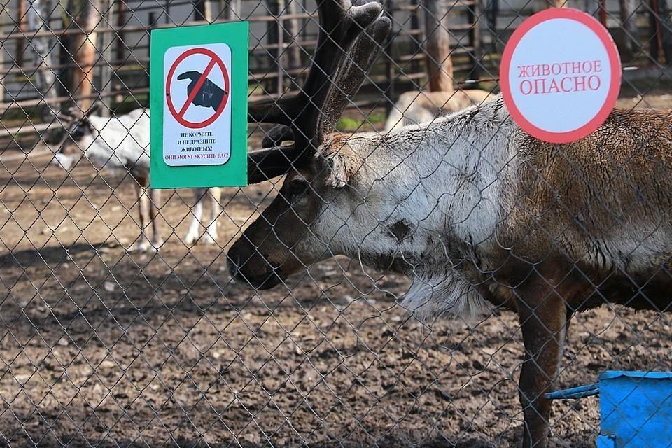 На Таймыре отменили режим ЧС, введенный из-за массовой гибели оленей