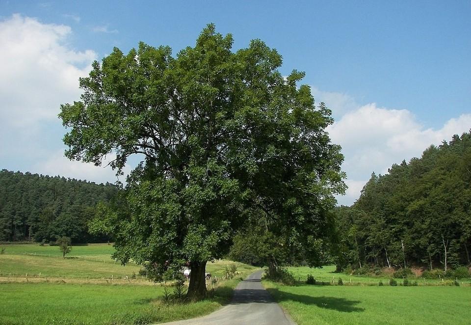 """в одном из микрорайонов Евпатории высадят более тысячи новых деревьев. Фото:""""Википедия"""""""