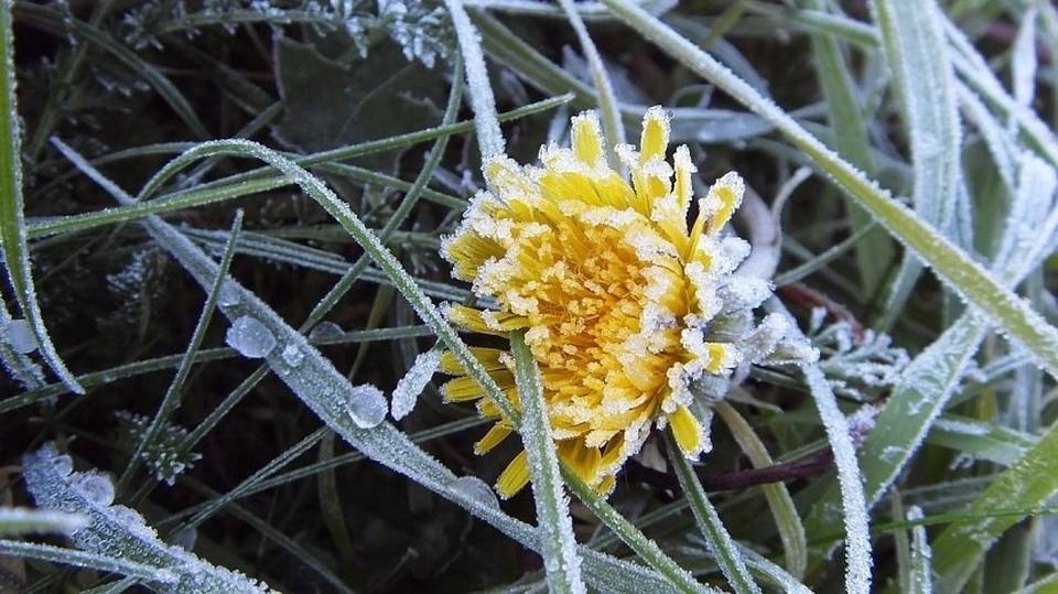 Жителей Тюменской области предупредили о грядущих заморозках.