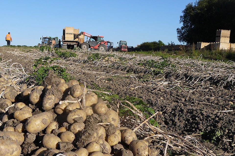 Овощей и фруктов в Крыму будет много. Фото: архив «КП»-Севастополь»
